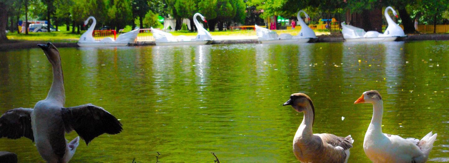 Парк Бачиново - лебеди, патета и още нещо