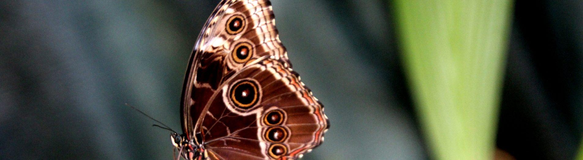 Уникални пеперуди 🦋